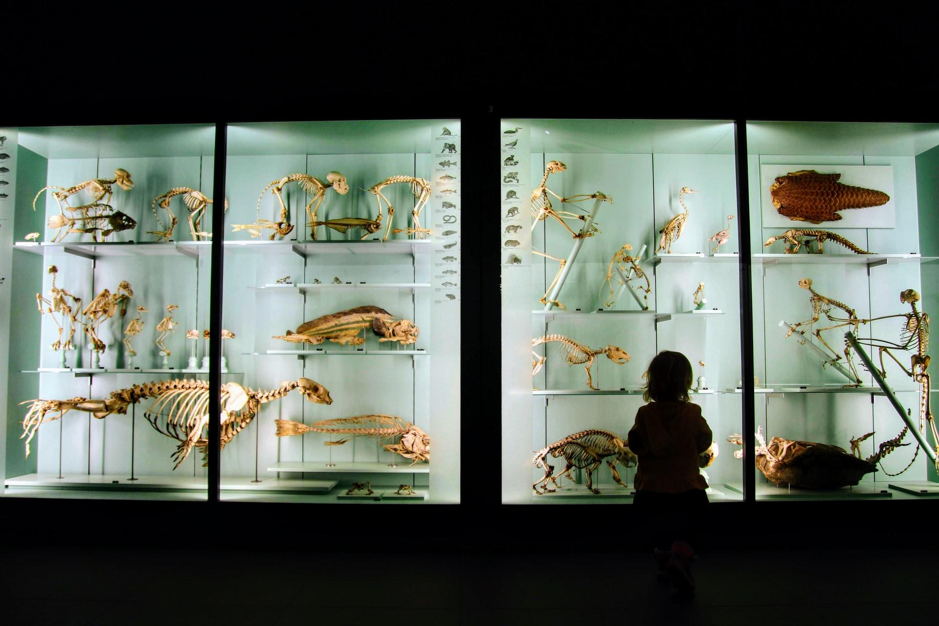 Nachhaltigkeit in Ausstellungen und im Leihverkehr